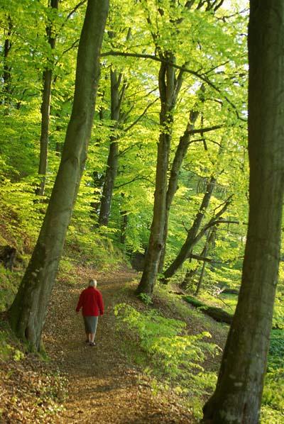 skoven fra oven