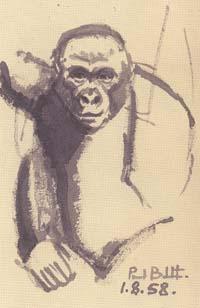 Paul Beckett: Gorilla. 1958